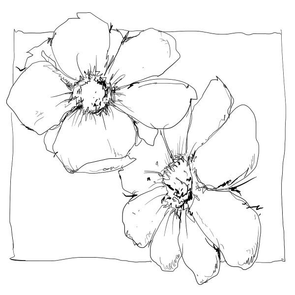 Color Sketch-Keilrahmen 20x20cm Zwei Blüten