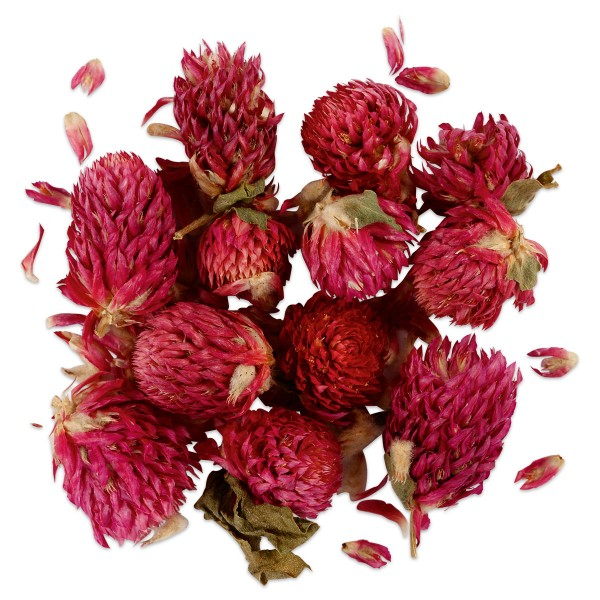 Trockenblumen rotes Kleeblatt flieder ca. 15g, Ø 1-1,5 cm