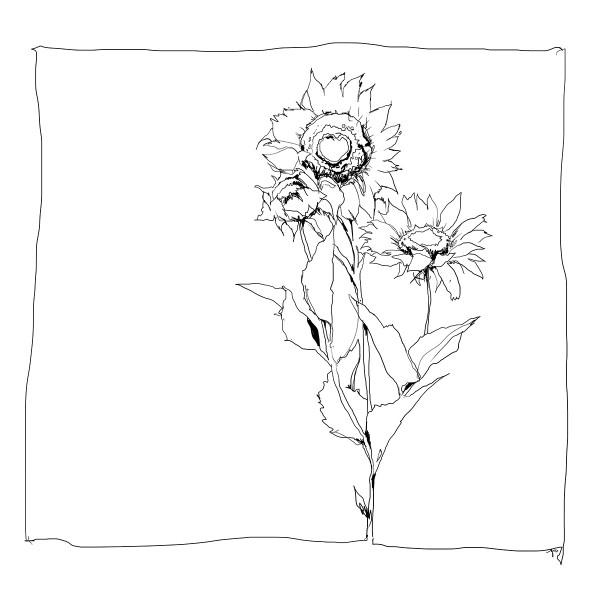 Color Sketch-Keilrahmen 20x20cm Sonnenblume
