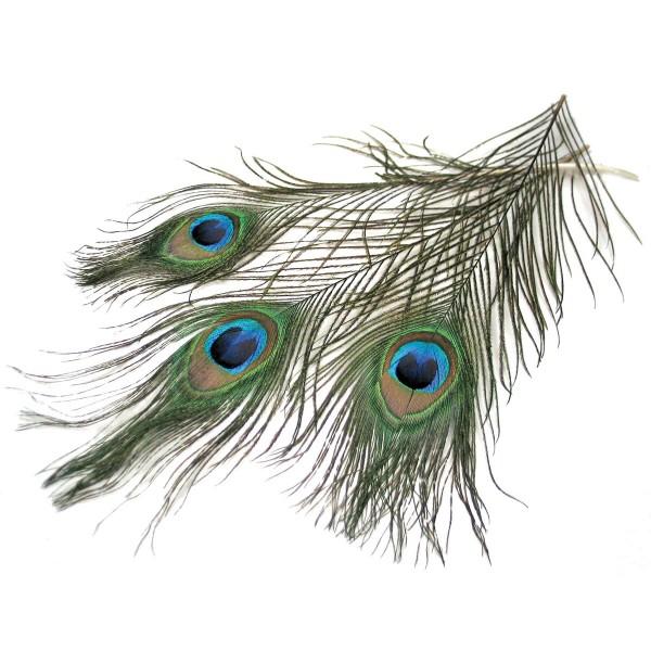 Pfauenfeder 25-30cm 1 St.