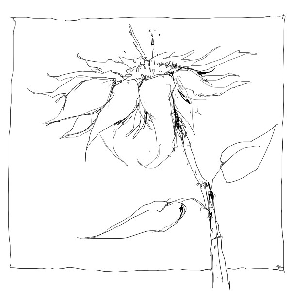 Color Sketch-Keilrahmen 20x20cm Blume 2