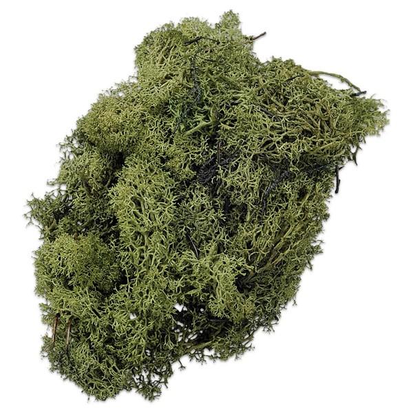 Islandmoos 250g grün