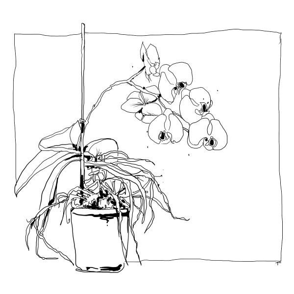 Color Sketch-Keilrahmen 20x20cm Orchidee
