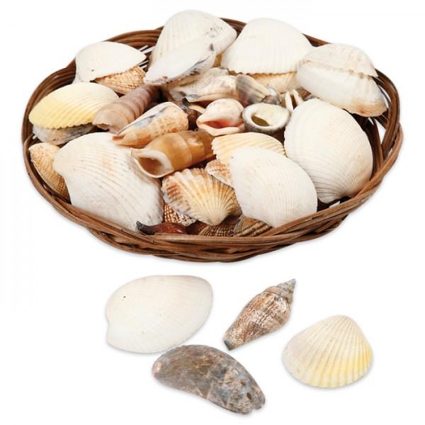 echte Muschelschalen Mix 350g beige/weiß