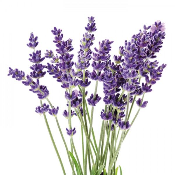 Sapolina Seifenduftöl 10ml Lavendel