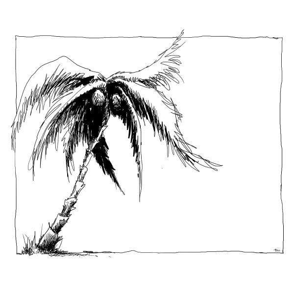 Color Sketch-Keilrahmen 20x20cm Palme
