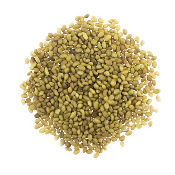 Luzernensamen - Alfalfa