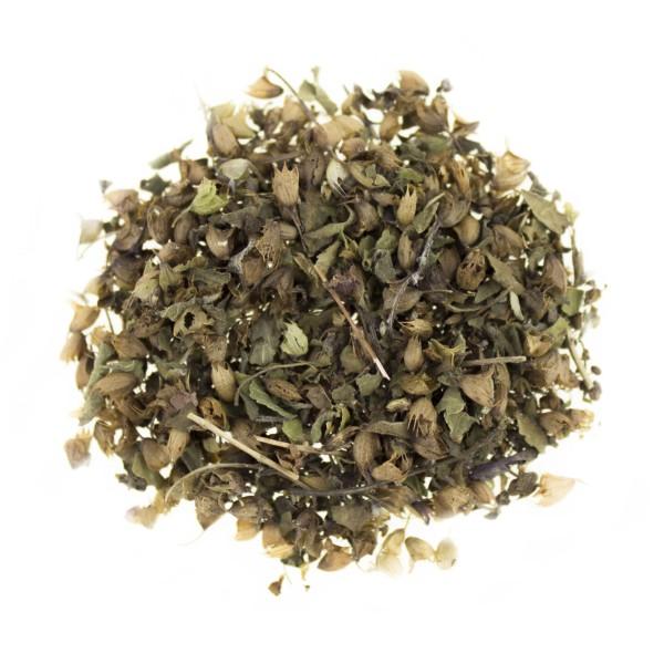 Tulsikraut, indischer Basilikum