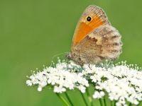 Schmetterling - 500 Teile (Puzzle)