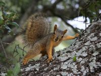 Eichhörnchen posiert - 1.000 Teile (Puzzle)